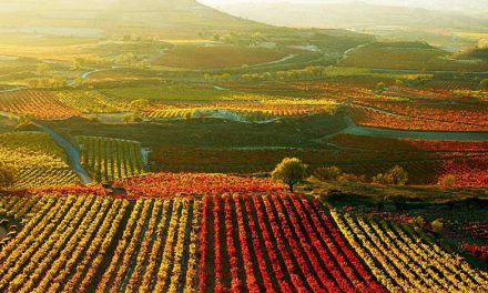 Conoce la magnífica Ruta del Vino.