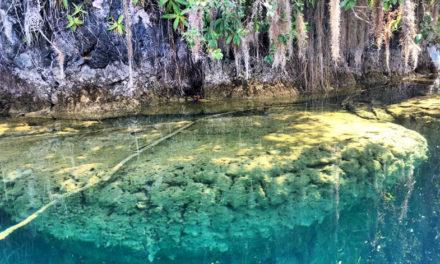 Chiapas, el oasis mexicano
