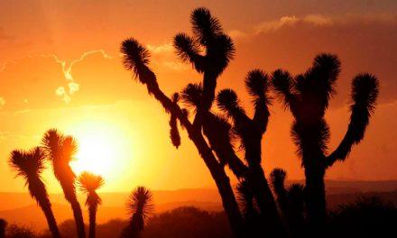 Naturaleza y paisajes alucinantes en el Pinacate, Sonora