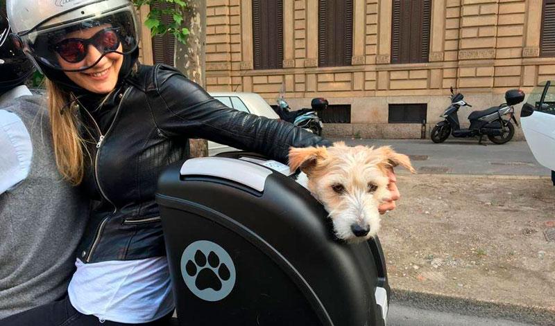 ¿Cómo viajar en moto con tu mascota?