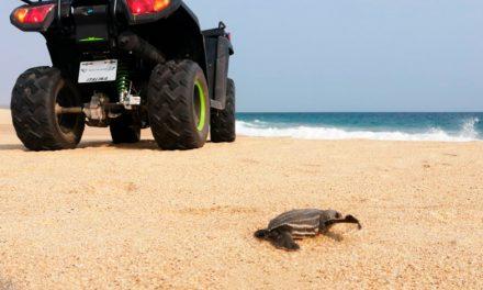 ITALIKA dona cuatrimotos para protección de tortugas en playas de Oaxaca